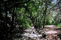 Panther Canyon Trail