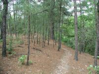 Pine needles litter the path of some of the trail.  McKinney Roughs is on the edge of the Lost Pines.