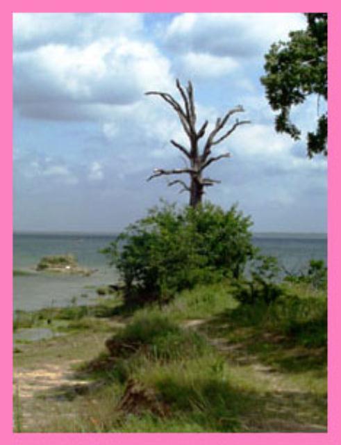 Dead tree on edge of lake.
