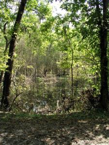 Swamp Continued