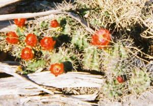 Some Beautiful Cactus Flowers