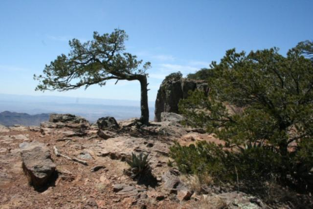Another View Of The South Rim