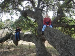 No good tree goes unclimbed