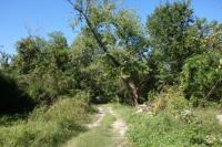 View Of The Trail