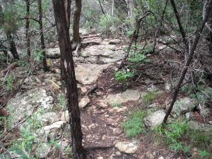 starting on north trail