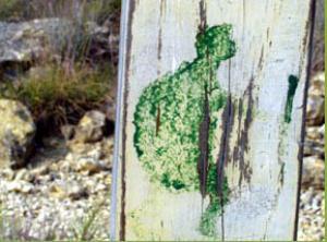 Trotting Texas Turles Signpost
