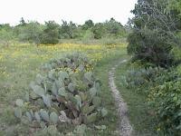 Comanche Bluff Trail