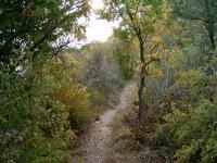 Trail ahead