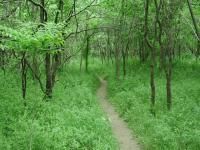 Most of the Homestead Trail is narrow and engulfed in trees and grasses.