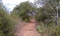The main trails were well maintained and wide enough so that you wouldn't have to push through grass or brush.