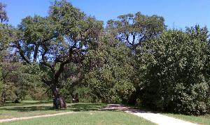 Seiders Oaks
