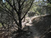 Trail, heading toward waterfall