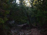 Mystic Canyon
