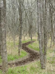 Boggy path
