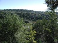 An observation deck provides a view over the Pedernales River valley below. The river can just about be seen between the trees.