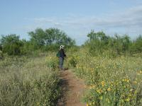 Coppertone pauses on the trail near blooming Sunflowers.
