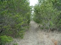 The trail in the preserve itself is either dirt or rock. And the trees close in on occasion.