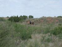 This rider with two mules are the only visitors we saw on the trail.