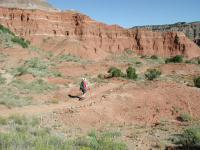 Coppertone hikes the trail. The red sandstone dominates the lower levels of the canyon.