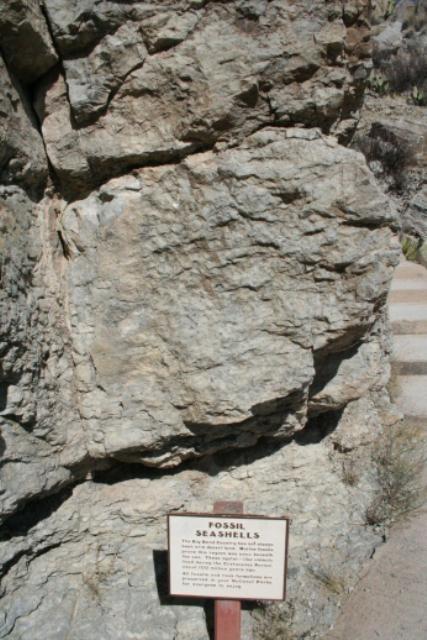 Fossil Seashells