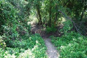 Lost Oak Loop