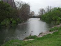 Shoal Creek turns, then empties into Town Lake