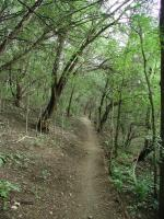 Most of the trail follows Bull Creek and is heavily wooded.