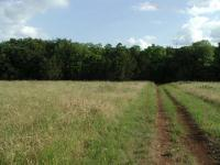 The beginning of the trail is dominated by pocket prairies covered in grasses and wildflowers.