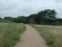 The trail starts off with some grassland, but quickly the tree cover predominates.