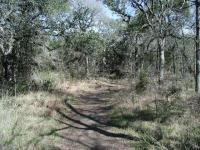 The trail between the three karsts is flat and well shaded my numerous oak trees.