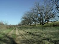 This trail gets its name from the long row of large Pecan trees that line the path.