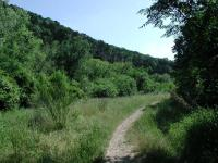 Some sections of the popular Bull Creek trail remain uncrowded.