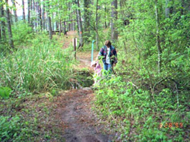 Crockett Natl Forest