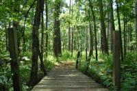 Bridge @ Little Lake Creek Wilderness