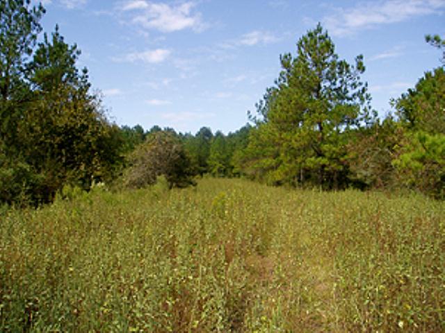 Lone Star Hike Trail - Little Lake Creek (LLC) South