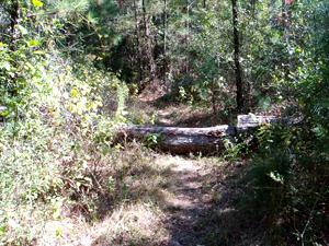 LLC - Sam Houston Nat Forest