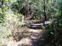 LLC - Sam Houston Nat Forest