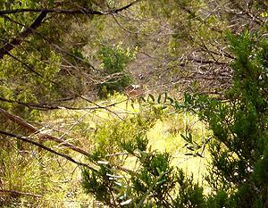 Pedernales Falls - Wolf Mountain Trail